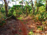 Honokaa hike: Kalopa State Park