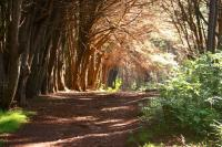 Makawao hike: Olinda Forest (Waihou Springs Trail)
