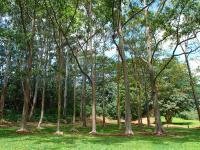 Wailua hike: Wailua arboretum