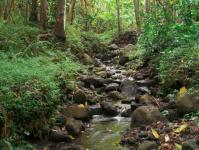 Kaneohe hike: Nakoa Trail in Ahupua'a O Kahana State Park