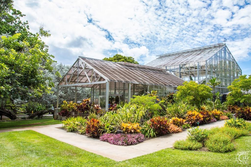 Foster botanical garden in honolulu oahu hawaii hawaiian beach rentals for Foster botanical garden honolulu